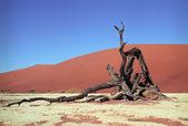 Namib çölü — Stok fotoğraf