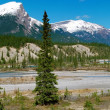 View on Canadian Rockies Mountains — Stock Photo