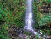 Erskine Falls — Stock Photo