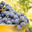 Fresh violet grapes on bawl — Stock Photo