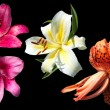 Three lilies isolated on black — Stock Photo