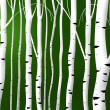 Abstract birch stems background — Stock Photo