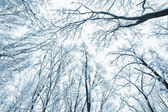 Trees covered snow over winter sky — Stock Photo