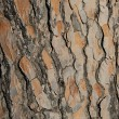 Stock Photo: Abstract pine bark texture