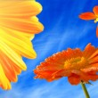 Abstract orange flowers with butterfly - Photo