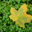 Autumn leave on green sprouts — Stock Photo