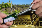 Open wine bottle — Stock Photo