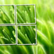 Abstract composition with grass over green and yellow background — Stockfoto #8985919