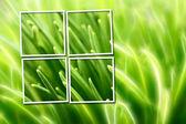 Composizione astratta con erba su sfondo giallo e verde — Foto Stock