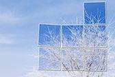 Arbre blanc dans la neige sur le ciel bleu — Photo