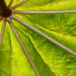 Close-up abstract leave structure — Stock Photo