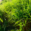 Grass and sun — Stock Photo