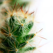 Small big cactus — Stock Photo