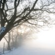 Misty Dawn over Snowy Field — Foto Stock