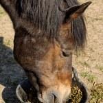 Girl Feeding her Horse — Stock Photo