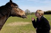 Kız onun atı besleme — Stok fotoğraf