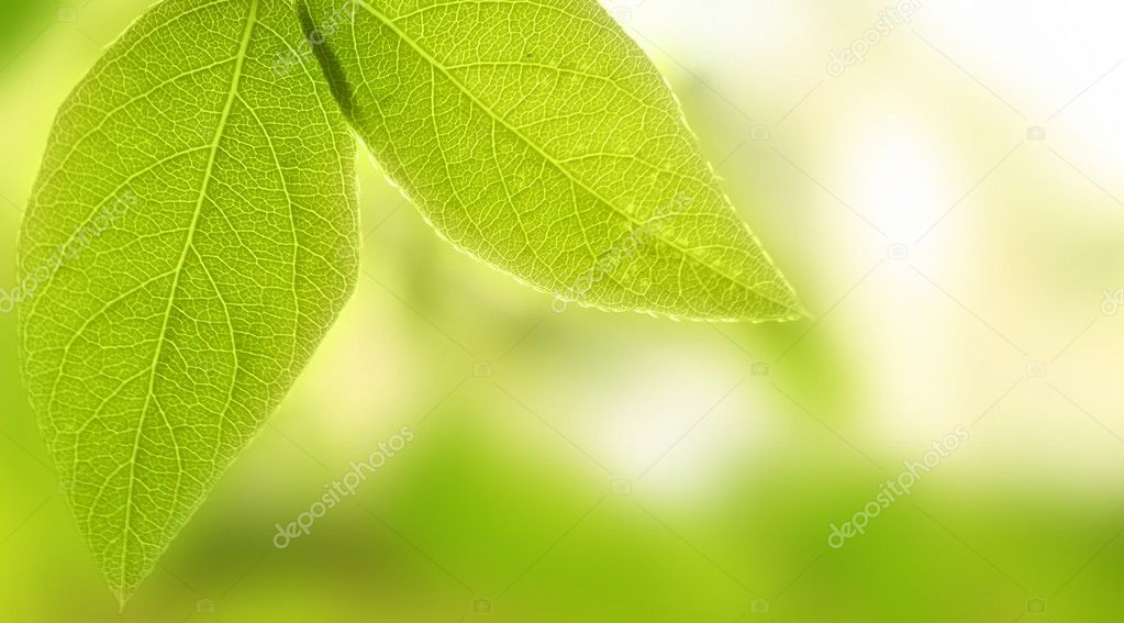 Green leaves — Stock Photo #8041690