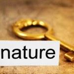 Nature concept — Stock Photo #8926738