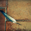 Fallen Feather — Stock Photo