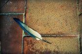 Pluma caído — Foto de Stock