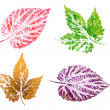 Hop leaves, painting — Stock Photo