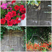 Stone wall and plants — Stock Photo