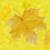 Background, colorful leaves — Stock Photo