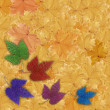 Stock Photo: Background, colorful leaves