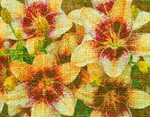 Lily flowers on a canvas — Stock Photo
