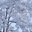 Snow and ice on branches — Stock Photo #9219925