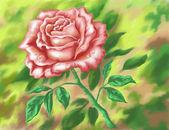 Flor rosa, pintura para desenhar mão — Foto Stock