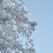 Snow and ice on branches — Stock Photo #9379578