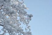 Snö och is på grenar — Stockfoto