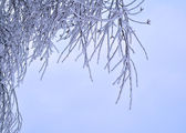 Snow and ice on branches — Stock Photo