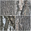 Bark of old trees, set — Stock Photo