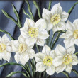 Stock Photo: Flowers narcissus
