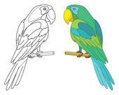 Bird parrot on a perch — Stock Photo