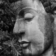 Buddha head close up - Stock Photo