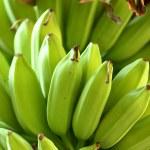 Banana on tree — Stock Photo