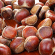 Chestnut — Stock Photo #8232179