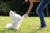 Woman train her dog — Stock Photo