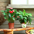 Plant pots — Stock Photo #8329241