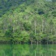 Lake with green tree - Stock Photo