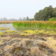Wetland — Stock Photo #8405347