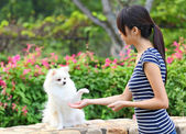 Woman training her dog — Stock Photo