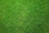 Field of fresh grass — Stock Photo