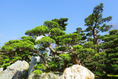 中国园林植物 — 图库照片