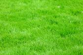 Nieuwe voorjaar groen gras — Stockfoto