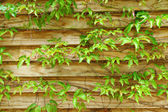 Wood fence with leaf — Stock Photo