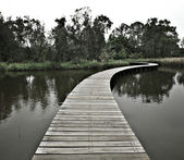 Boardwalk through water to forest — Stock Photo